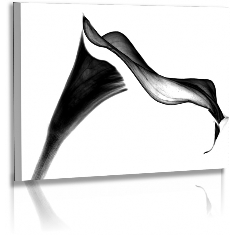 Blumenbilder Schwarz Weiß blumenfotos bilder schwarz weiss calla blume