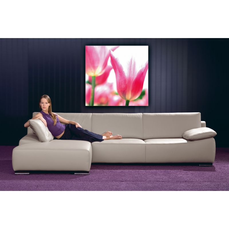naturbilder blumenfotos blume tulpen bilder fr hlingsb. Black Bedroom Furniture Sets. Home Design Ideas