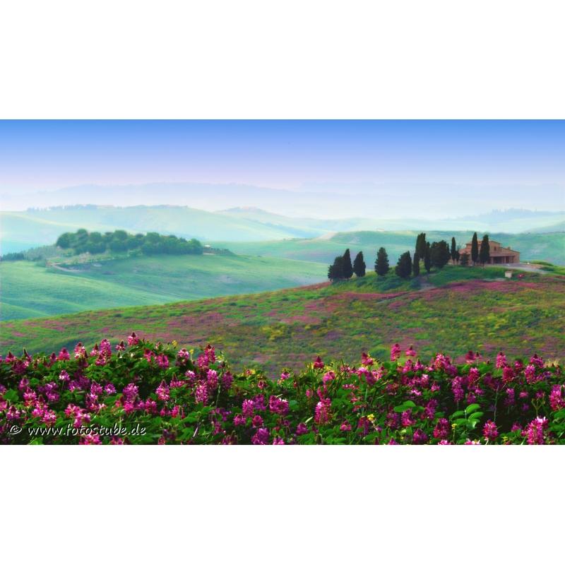 Naturbilder - Landschaft - Bild - Toskana - Italien - Frühling