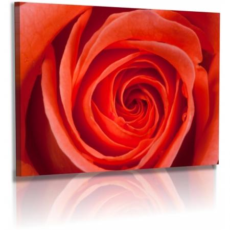 naturbilder blumenfotos blume rose bilder orange. Black Bedroom Furniture Sets. Home Design Ideas
